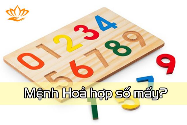 menh hoa hop so may?