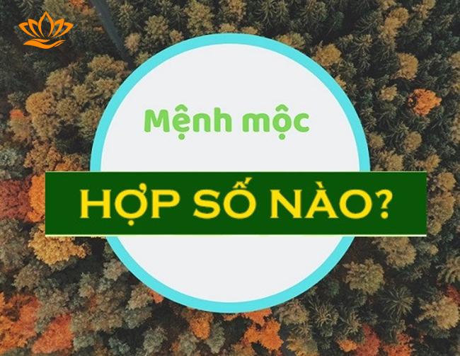 menh moc hop so nao?